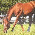 Zdjątka koników. Zrobiłam na wycieczce. #konie #zwierzęta #fotki #foty