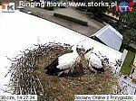 http://images29.fotosik.pl/12/c226c03c6072b1e4m.jpg