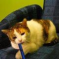 """Z cyklu - """"Mikusia gryzie długopis"""" :) #kot #koty #śmieszne #długopis #miki #mikusia"""