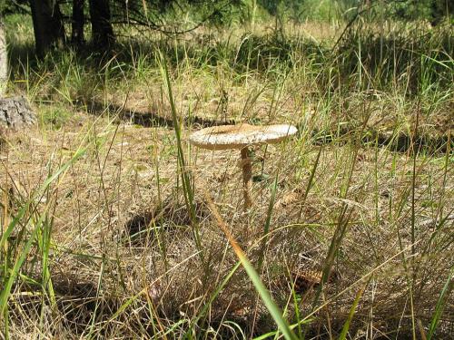 #grzyby #kanie #las #przyroda #jesień