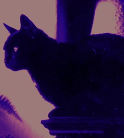 Linda, mój pierwszy kot, aparat byl kiepski, pokolorowałam fotkę na photoshopie