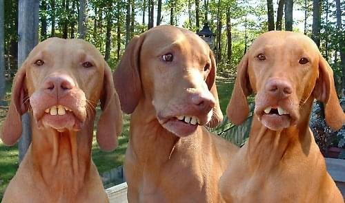 #Psy #śmieszne #zęby