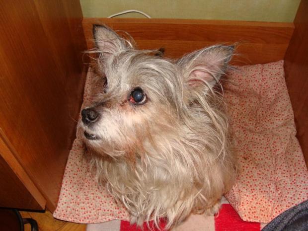 #pies #piesek #pieseczek #piesio #zwierzęta #kudłaty #pikuś