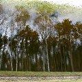 Gdzieś w lesie na terenie Nadleśnictwa Kaletnik gm. Koluszki #Nadleśnictwo #Kaletnik #Brzeziny #Koluszki #las #zbiornik #wodny