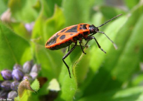 #owady #makro