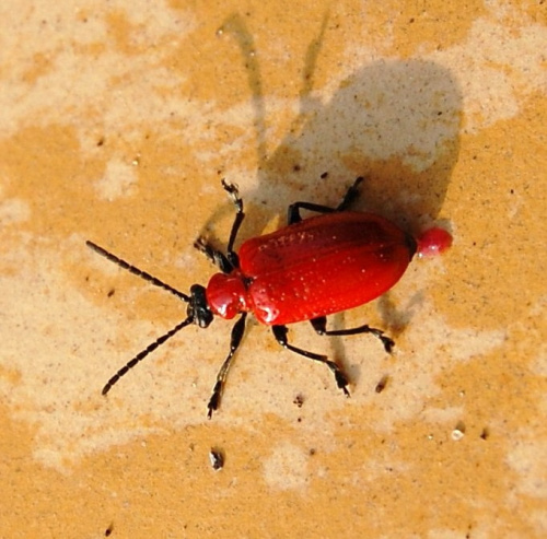 to ze strachu,ale ja musze wygladac!!:))) #owady #ogrodek