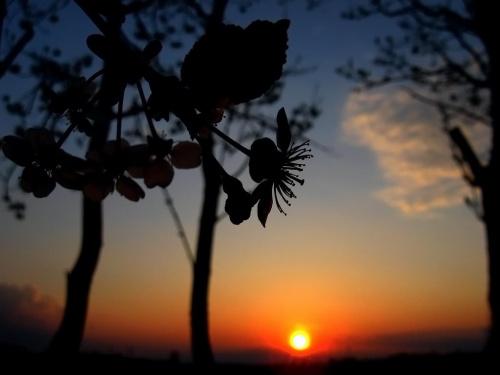 kwiatek i słońce part 3 :D #zachód #kwiatek