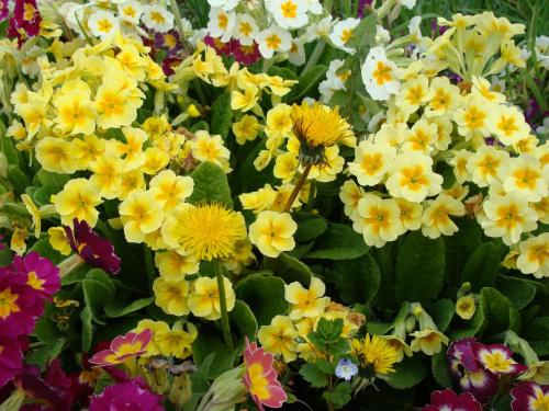 Roślinki prosto z ogródka. #kwiatki #kwiatuszki #kwiaty #ogród #rośliny