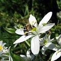 #maj #wiosna #kwiaty #rośliny