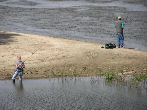 W Wisle dalej plywaja ryby #ŁowienieRyb #rybacy #woda