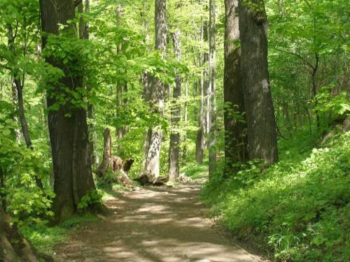 Las w Zagórzu Śląskim #las #zieleń #park #wiosna #drzewa #ZagórzeŚląskie