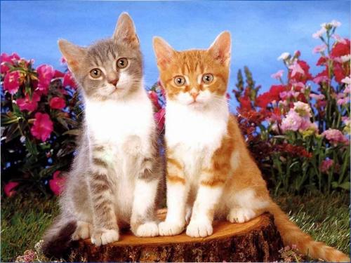 Kociaczki...
