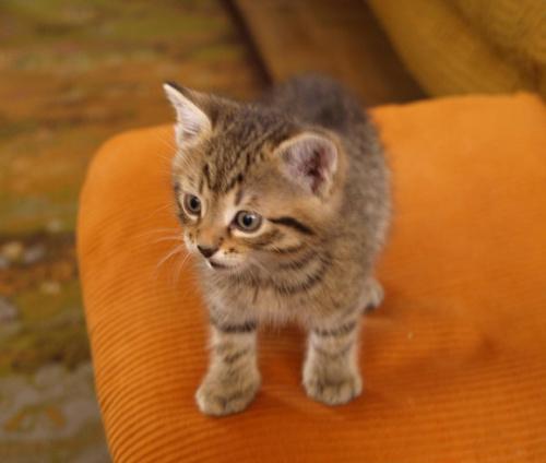 #kot #kocurek #koty #Maciek