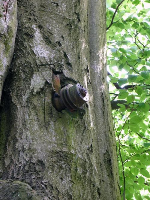 Las Nadleśnictwa Brzeziny w Kaletniku #las #Nadleśnictwo #Kaletnik #Brzeziny #Koluszki #zbiornik #Kwiat #drzewa #grzyby