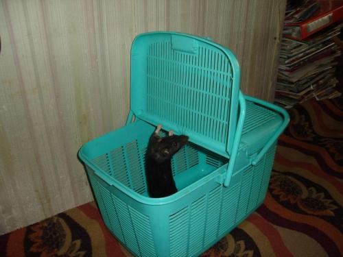 Plastikowy kosz piknikowy jako Szczurzy Transporter ;)