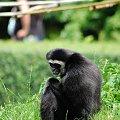 #zwierzęta #małpa #zoo
