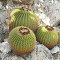 Niesamowite te kaktusy były #MonacoIMonteCarlo