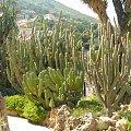Jardin Exotique zawieszone są na skale #MonacoIMonteCarlo
