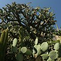 Rosliny tropikalne rosną tu w sprzyjających warunkach #MonacoIMonteCarlo