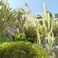 Wędrówka wśród kaktusów #MonacoIMonteCarlo