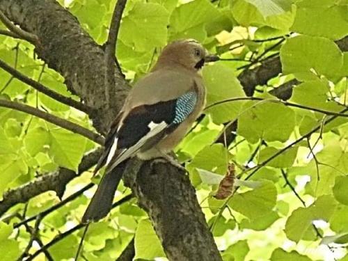 #ptak #ptaki #natura #przyroda #zwierzęta