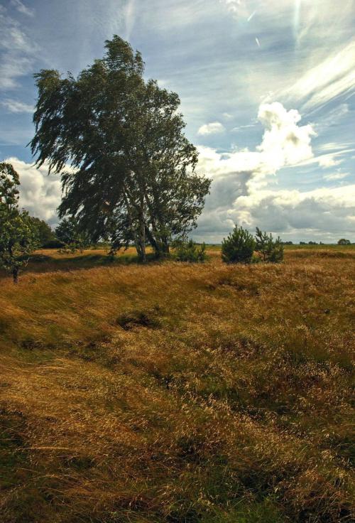 #krajobraz #drzewo #brzoza #wiatr #chmury