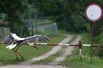 http://images29.fotosik.pl/286/de8c96c2ea566813m.jpg