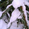 gałązka w sniegu #zima #mróz #snieg #śnieg #listopad #zaspy #macro #drzewa #przyroda #natura #gałęzie #szron #zimno #biel