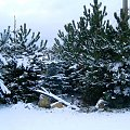 zimowe drzewa #zima #mróz #snieg #śnieg #listopad #zaspy #macro #drzewa #przyroda #natura #gałęzie #szron #zimno #biel
