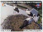 http://images29.fotosik.pl/30/cdf25efe8526716am.jpg