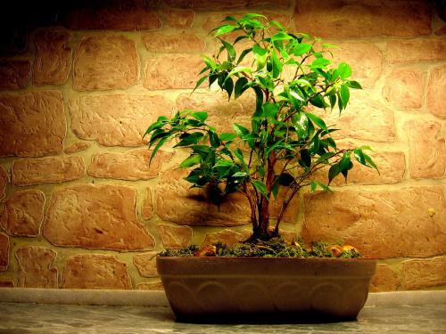 moje drzewko
