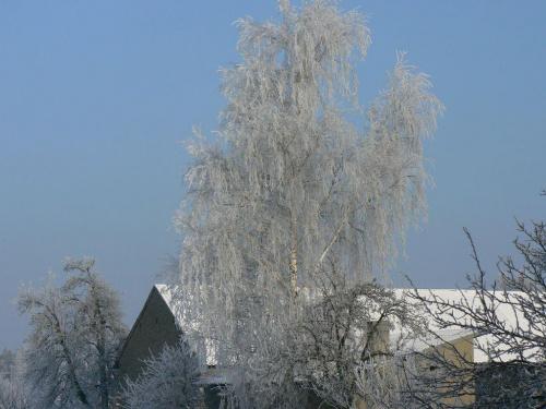 -20*C #zima #mróz #drzewo