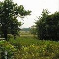 Hola - okolice #łąki #Polesie
