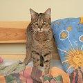 Łobuz i poduszka ze słońcem #łobuz #kot #łóżko