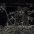 Koty zrobione na drutach #Kot #koty #zwierzęta #ciekawe #śmieszne #zabawne #fajne #przeróbki