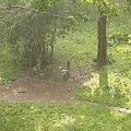 prawie jak amazonia #Łódź #Lodz #deszcz #ulewa #górna #lenartowicza