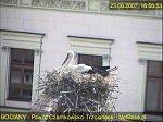http://images29.fotosik.pl/6/e854ab88cd16faf1m.jpg