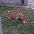 piesek sąsiadów #pies #piesk #pieseczek #dog #doggy