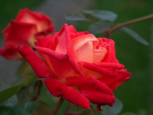 oj piekne kwiaty
